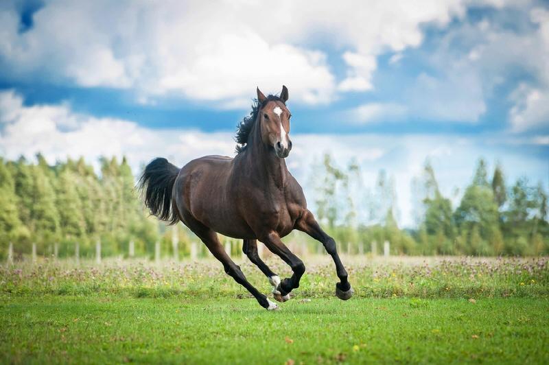 REITGESTÜT: NUR 45 FAHRMINUTEN VON WIEN mit 26 Pferdeboxen, Reithalle /  / 2020Wien Umgebung / Bild 4