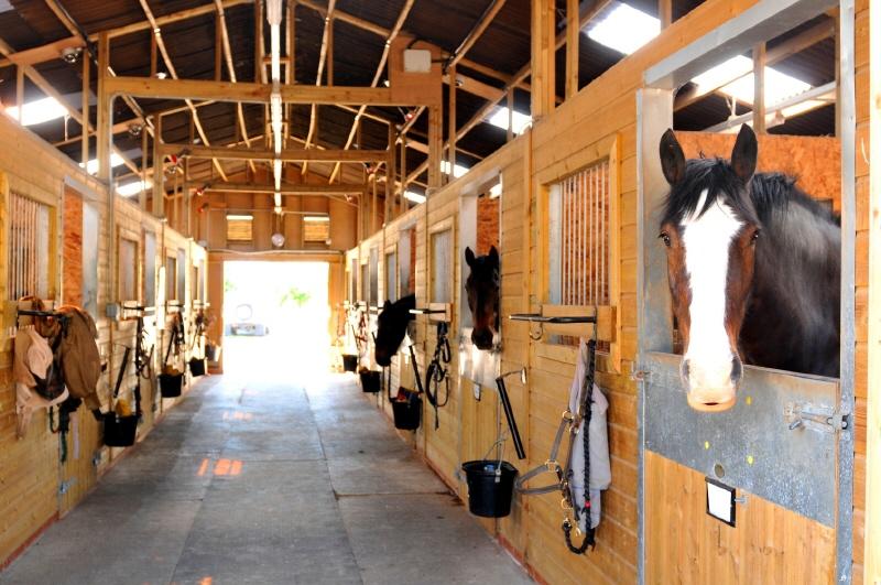 REITGESTÜT: NUR 45 FAHRMINUTEN VON WIEN mit 26 Pferdeboxen, Reithalle /  / 2020Wien Umgebung / Bild 6