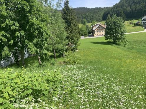 Idyllisches Grundstück in Lackenhof